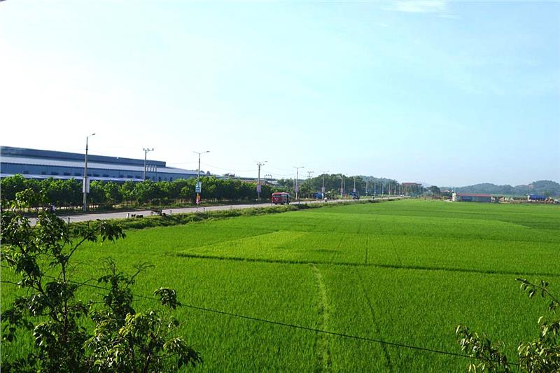 Rice fields in Bac Giang