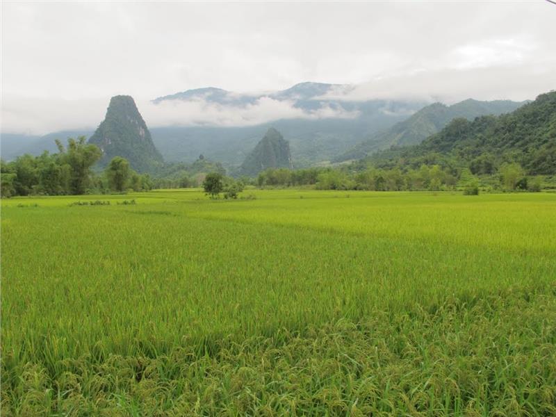 Rice field in Bac Kan