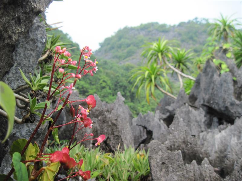 Bai Tu Long National Park - Treasure of nature