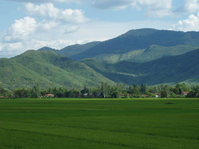 Phu Phong rice field in Tay Son, Binh Dinh