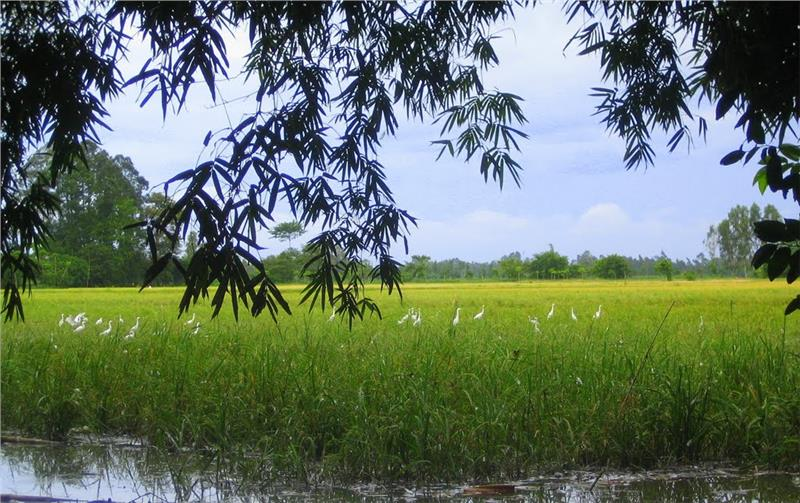 Bang Lang Stork Sanctuary