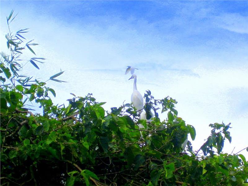 Unique scenery in Bang Lang Stork Sanctuary