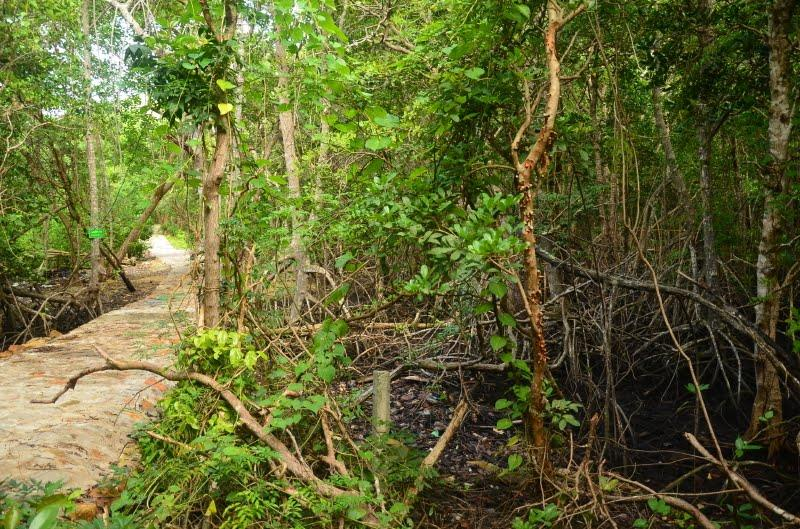 Bay Canh Island - Mangrove forests