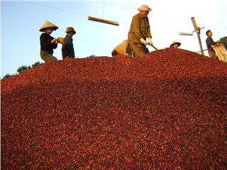 Economy in Central Highlands Vietnam