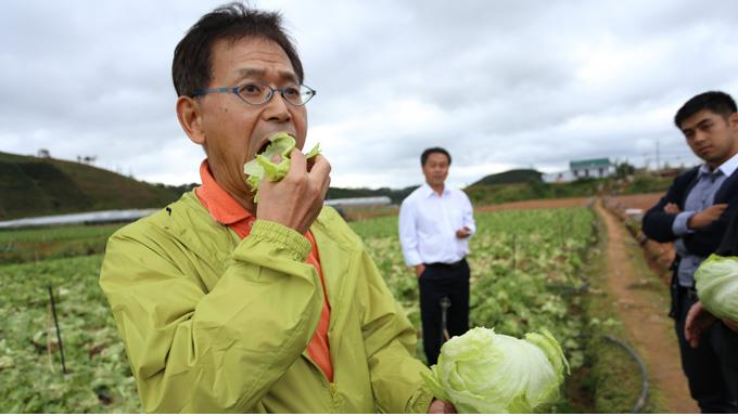 Experts checking vegetable