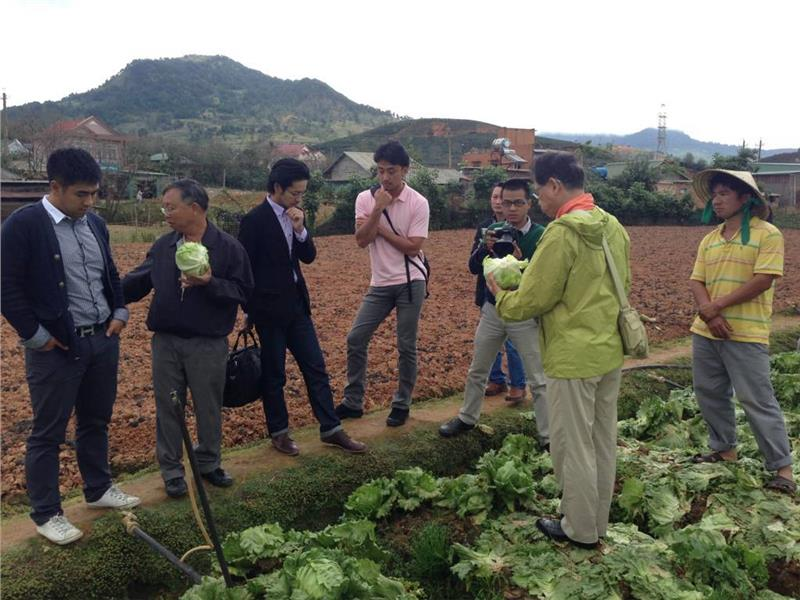 Dalat vegetable hopes to improve with Japanese model