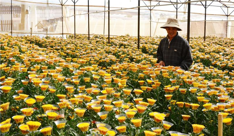 Flower plantation applied hi-tech in Dalat