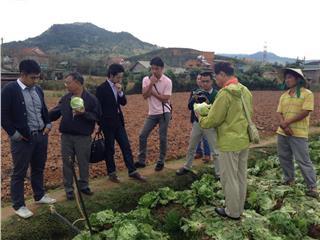 Dalat vegetable hopes to improve with Japanese model