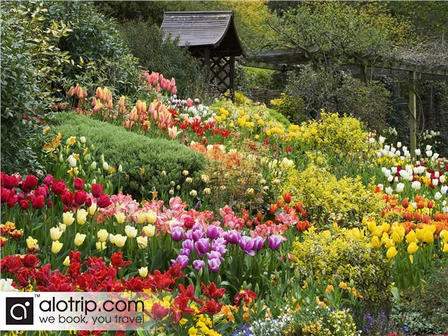 Da Dat Flower Garden