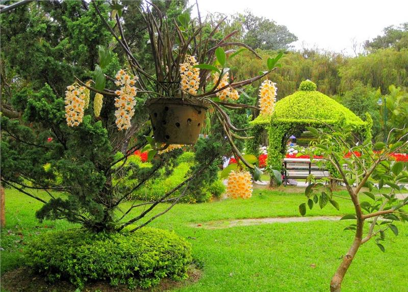 Magnificent scenery in Dalat Flower Park