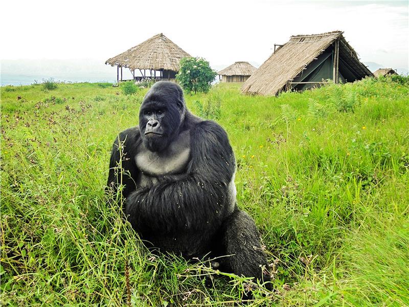 Vườn quốc gia Virunga