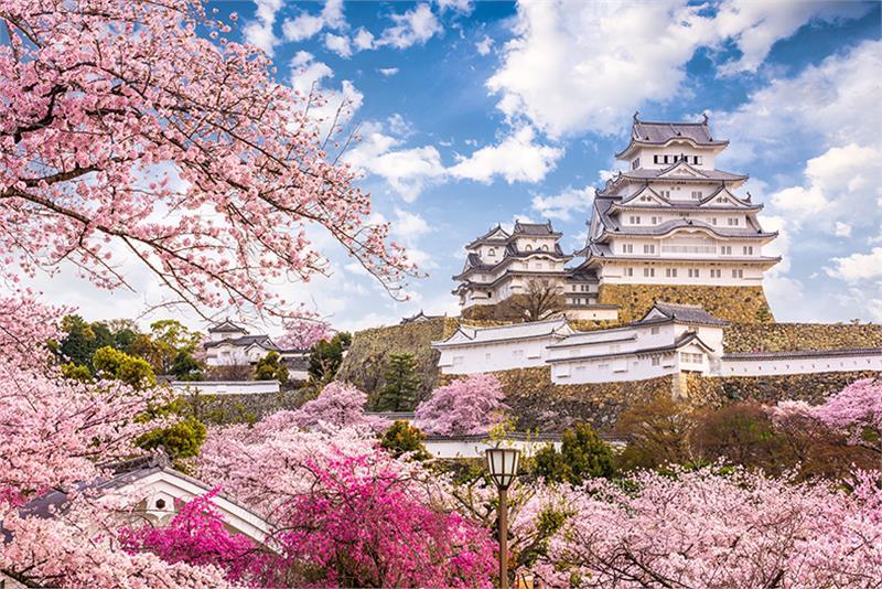 Hoa đào nở rộ xung quanh lâu đài Himeji