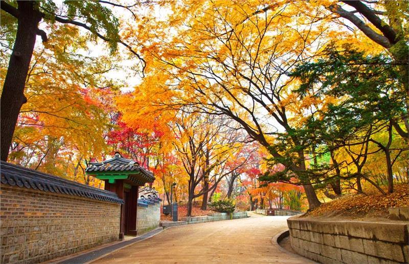 Hàn Quốc đẹp lãng mạn mỗi khi thu về