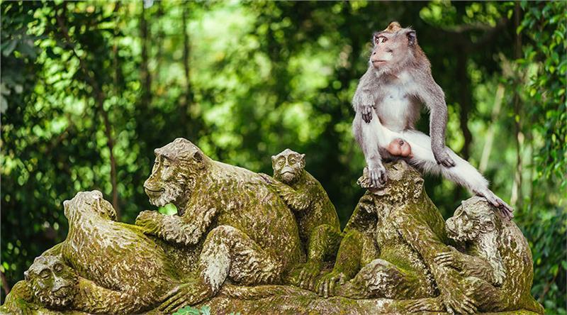 Đến với khu rừng khỉ