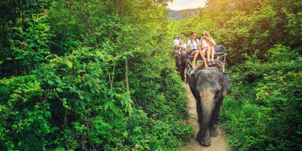 Công viên voi ở Chiang Mai