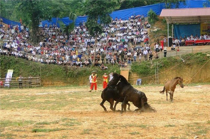 Horse fighting festival