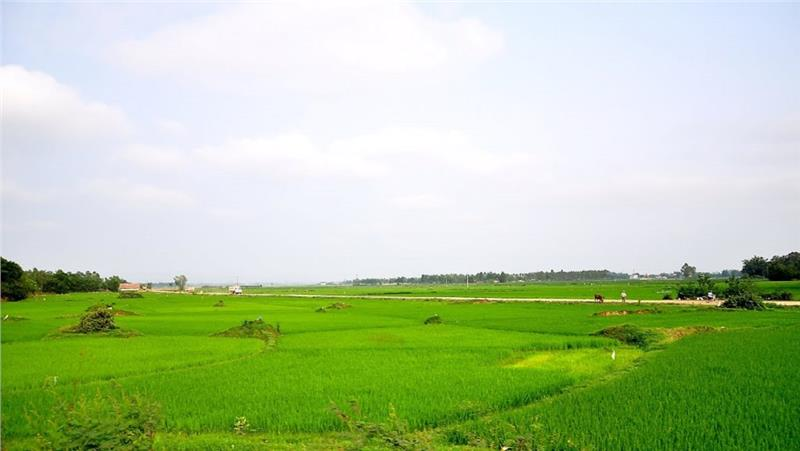 Truong Son rice field