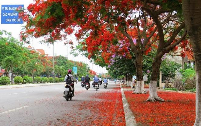 Con đường hoa phượng dài nhất Việt Nam