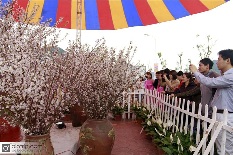 Visitors to Halong Cherry Blossom Festival