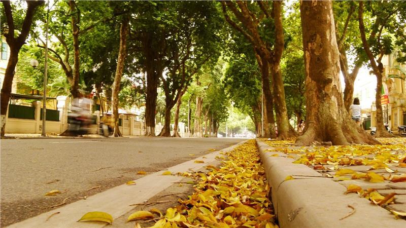 Sắc vàng trên con đường ờ Hà Nội