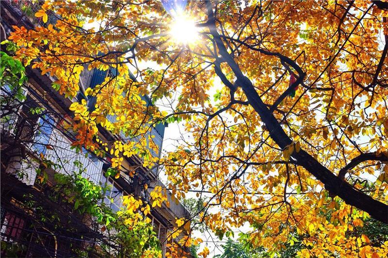 Ánh nắng mùa thu