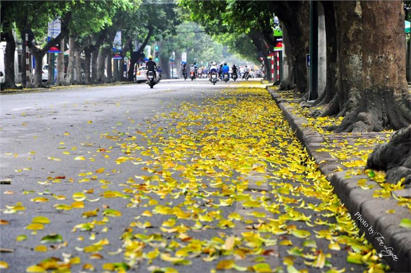 Hanoi street with gold leaves in autumn