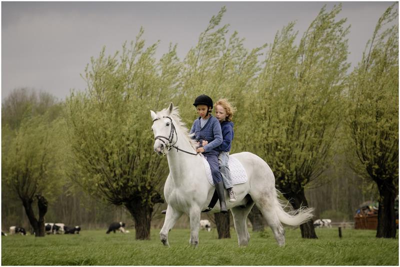 Finn (Netherlands)