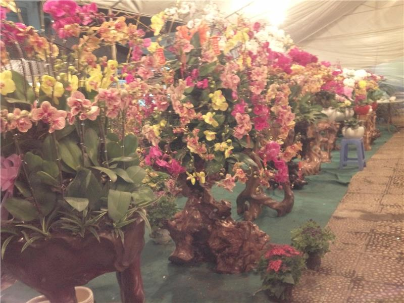 Flower Booth in Spring Agricultural Fair 2015