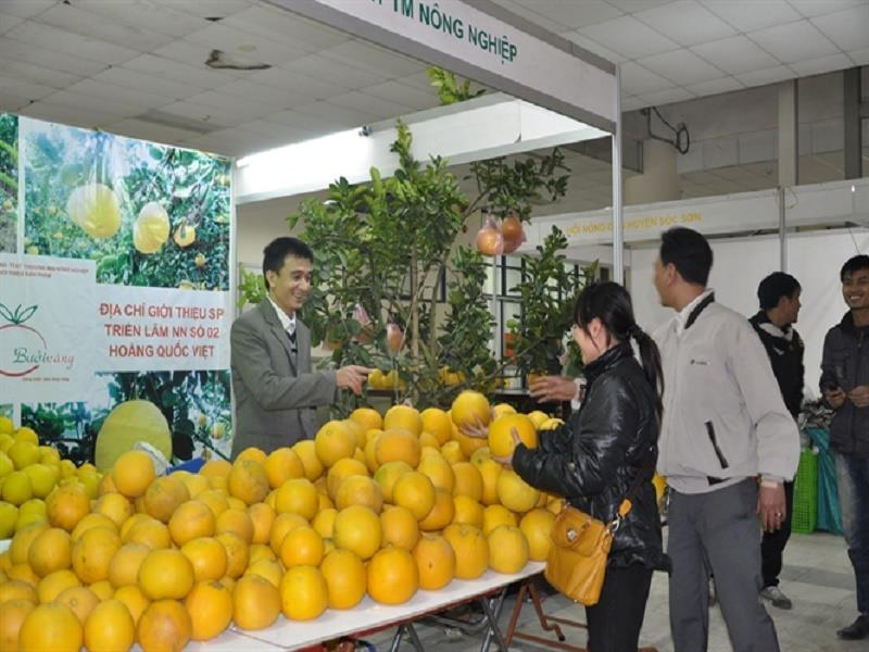 Grapefruit booth in Spring Agricultural Fair 2015