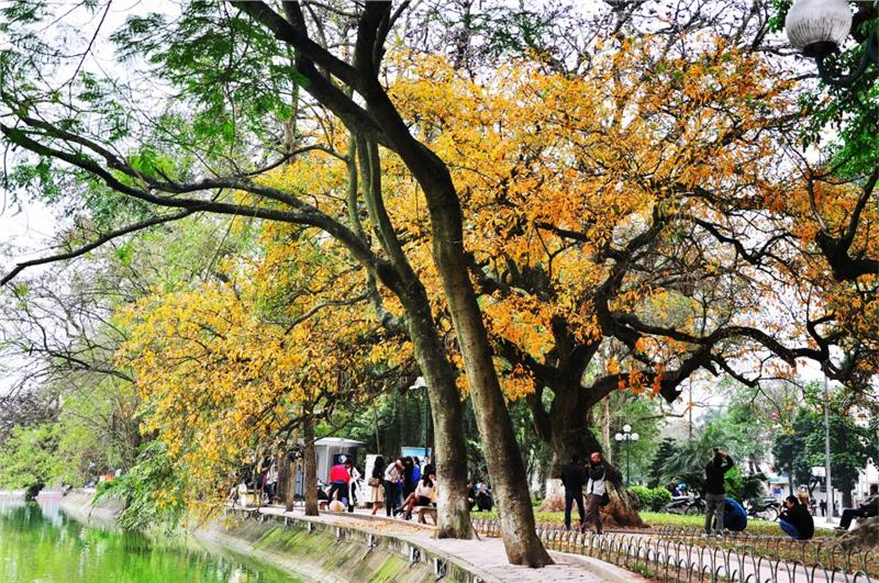 The colorful beauty of Vietnam Autumn