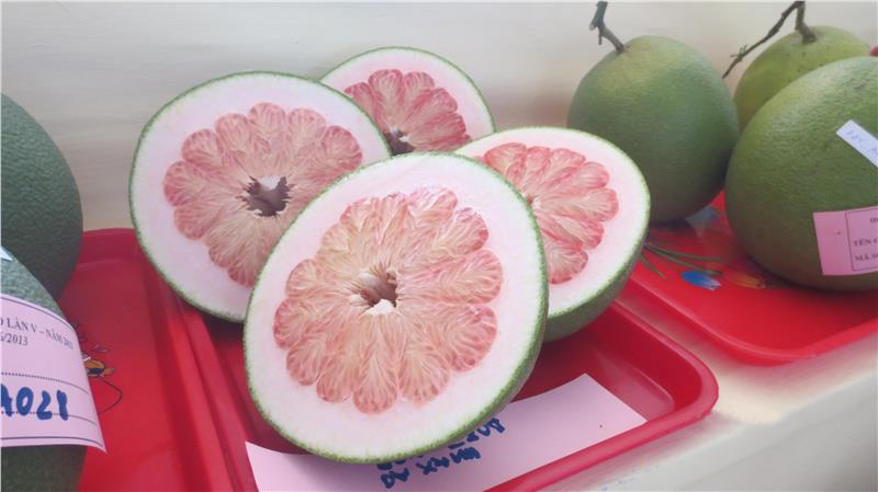 A local pomelo in Southern Fruit Festival