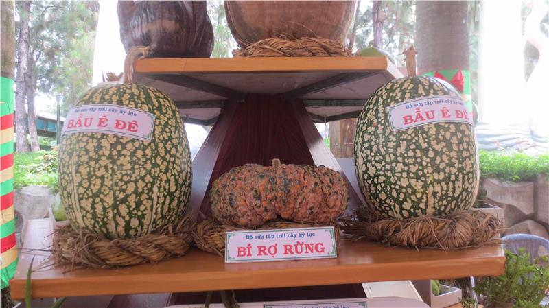 Special fruits in Southern Fruit Festival