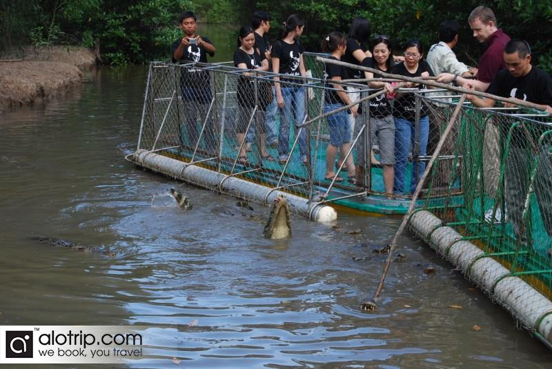 Crocodile fishing in crocodile farm