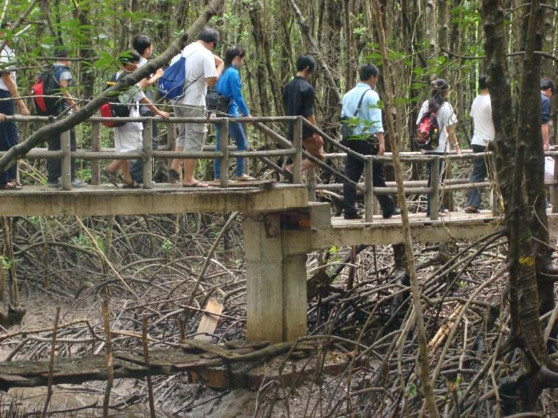Travel Can Gio Mangrove Forest