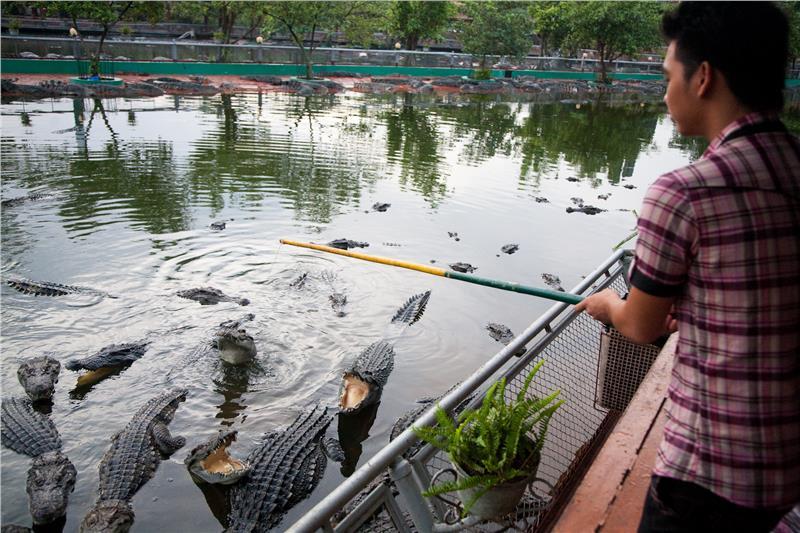 Fishing for Crocodiles in Suoi Tien Park