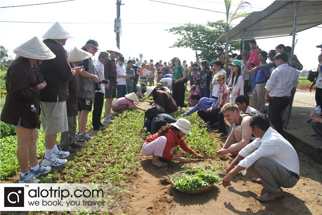 travellers planting in Tra Que vegetable village
