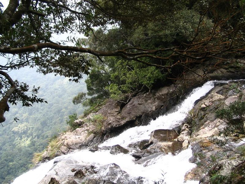Inside Bach Ma National Park