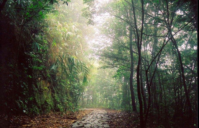 Trail inside Bach Ma National Park