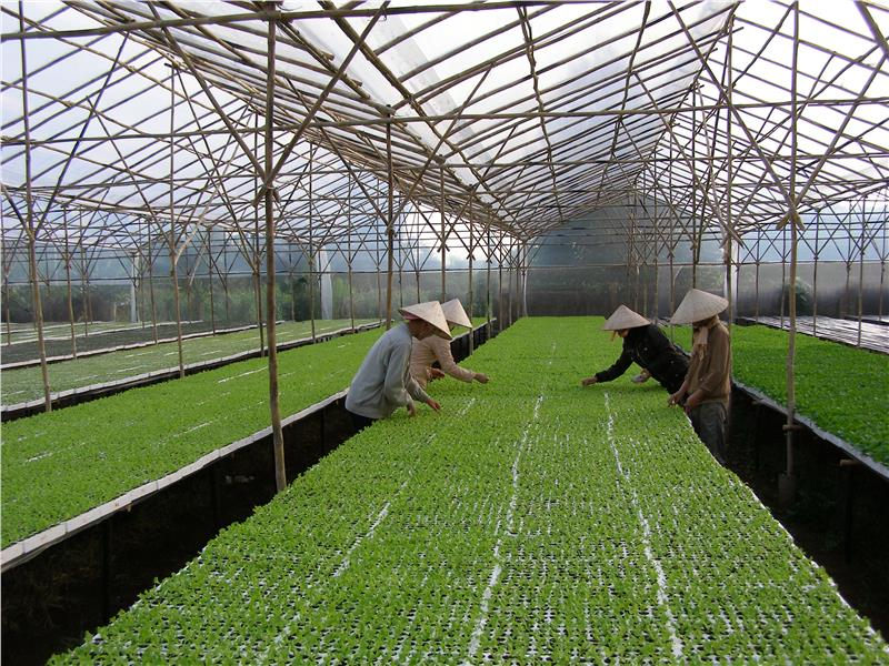 Vegetables production with hi-tech applications in Lam Dong