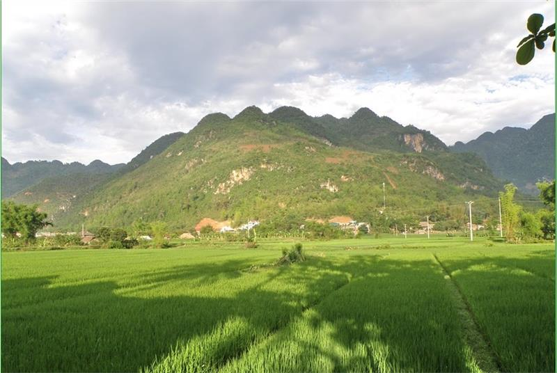 Rice field in Lac Village, Mai Chau