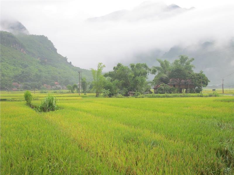 Pom Coong Village