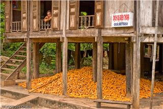 Mai Chau economy