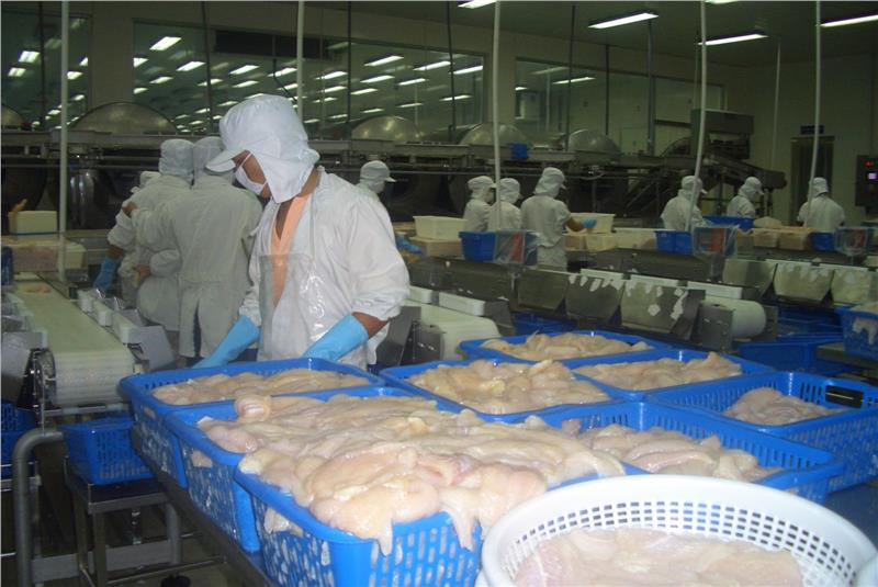 A pagasius processing factory