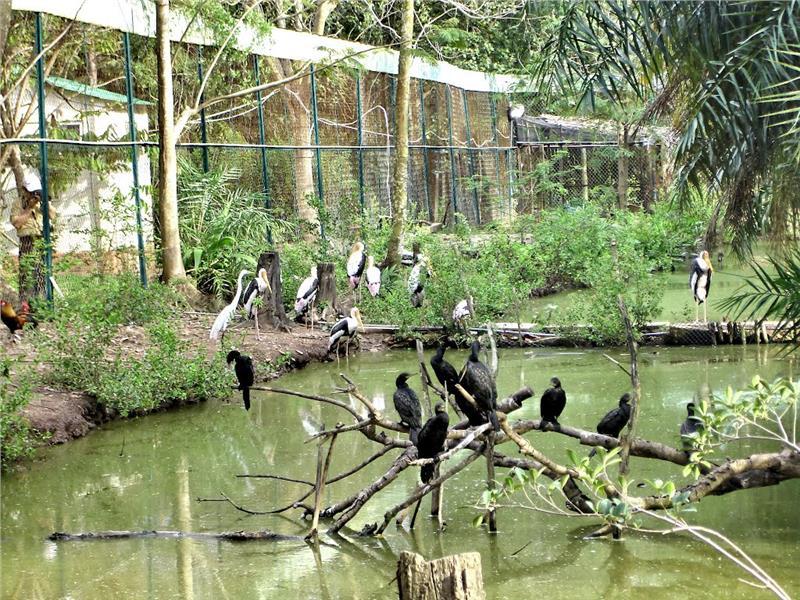 Amazing Vietnam eco tours to Southwest bird sanctuaries