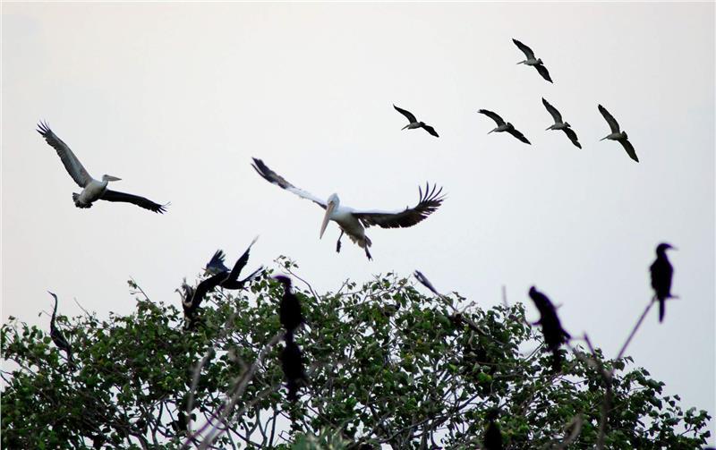 Bac Lieu Bird Sanctuary in Bac Lieu Province