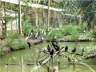 Amazing Vietnam eco tours to Southwest bird sanctuaries