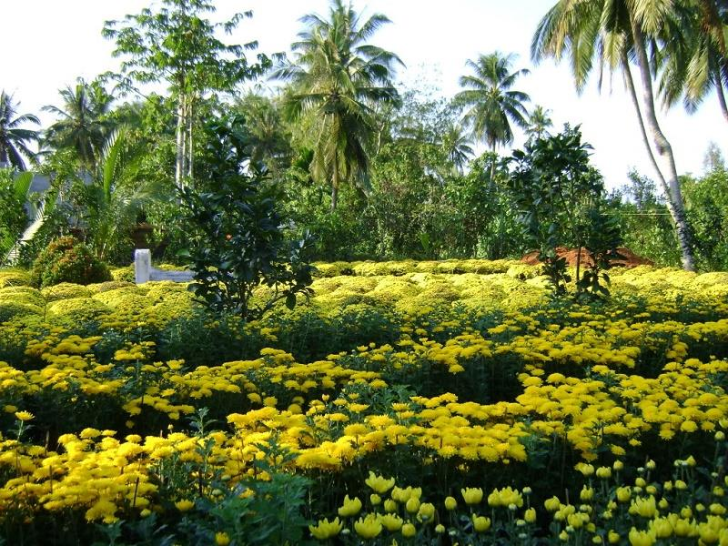 World of flowers at Cho Lach Village