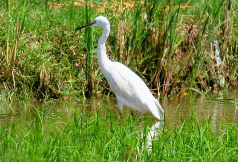 Vam Ho Bird Sanctuary in Ben Tre Province