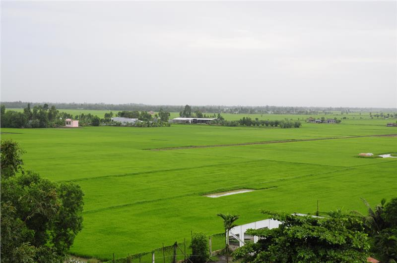 Immense paddies in Mekong Delta