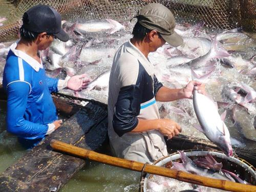 Mekong Delta fishery sector to be developed